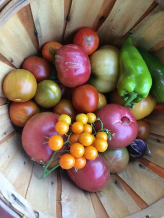 Ukiah, CA: from our garden