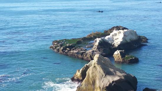 Margo Dodd Park : Check out the seals