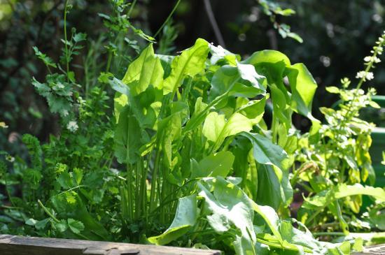 Grüne Oase in Bad Vilbel  Bild von KreilingsSommerGarten