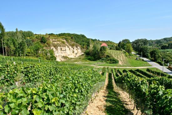 Sandomierz, Polska: Widok na winnicę