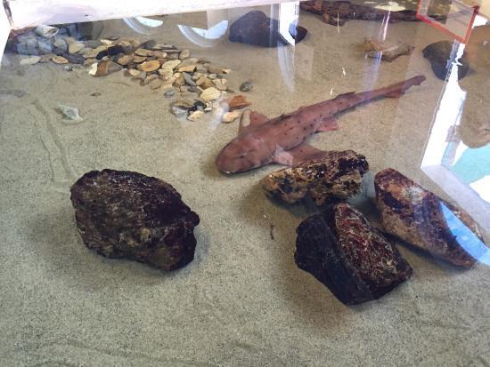 Santa Monica Pier Aquarium: Little shark