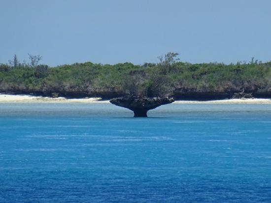 阿尔达布拉大环礁岛照片