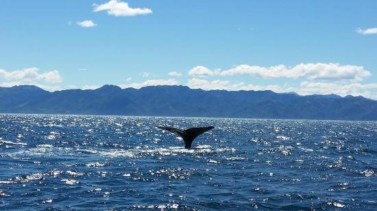 Lazy Shag: Sperm Whale