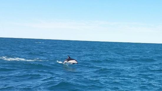 Lazy Shag: Dolphin