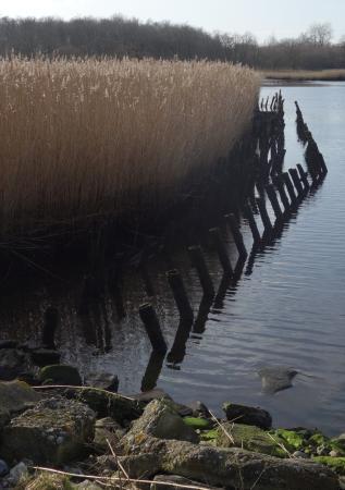 Fjordstien ved Sakskøbing照片