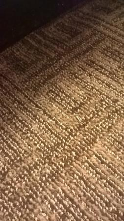 Comfort Inn St Louis - Westport: Un-vacuumed carpet