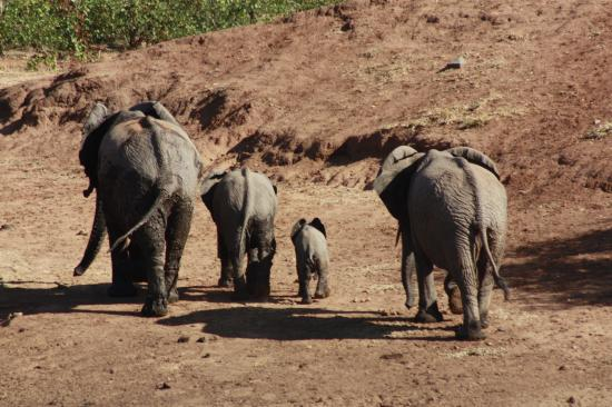 Flight of the Eagle Safaris & Tours: Elephant family