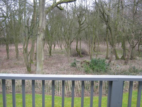 Overstone Park Hotel: Woods behind room