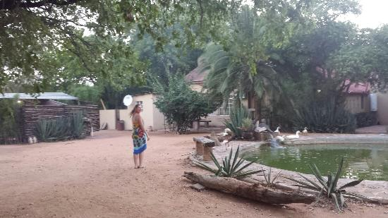 Camp Itumela: Loud ducks, cows, chickens, and roosters  :(