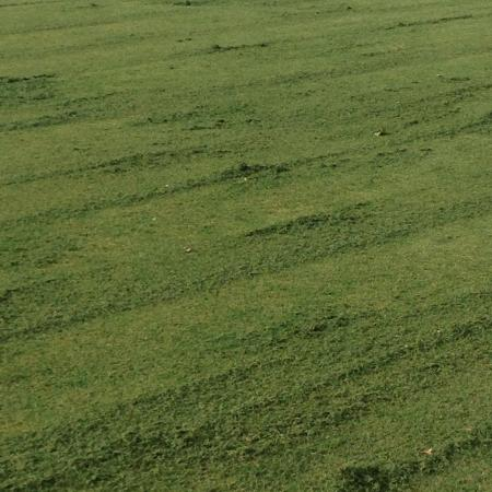 clumps of grass in fairway - Picture of Trump National ...
