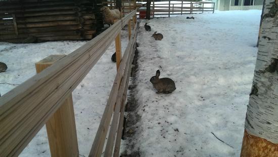 Motelli Rovaniemi: зайцы :)