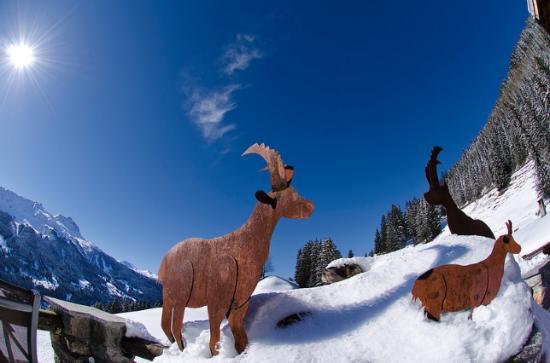 Berghaus Alpenrösli: Wildsichtungen auf der Terasse
