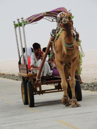 White Desert: Unth ki sawari
