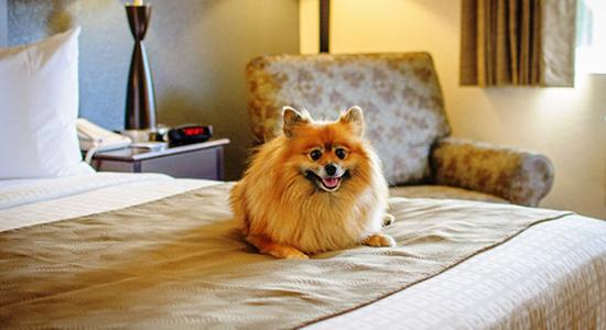 Baymont Inn & Suites Owatonna: Pet Friendly