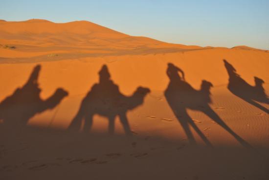 Palais des dunes: camels 2