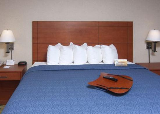 University Quality Inn: guest room