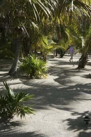 Cayo Espanto: Palms