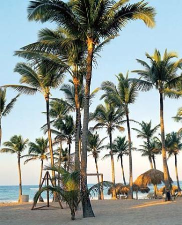 Excellence Punta Cana : Beach