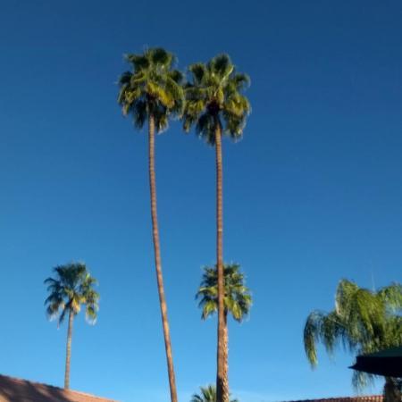 La Maison Hotel Palm Springs Ca