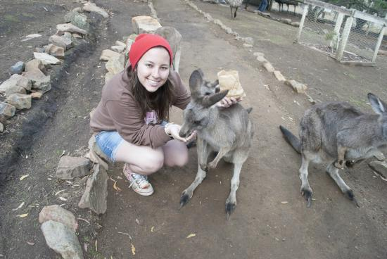 The Pickled Frog: Come feed the Kangaroos with us at Bonorong Park