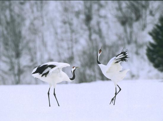 Hokkaido Treasure Island Travel - Day tours