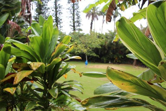Haiku Plantation Inn: Maui Bed and Breakfast: Yard