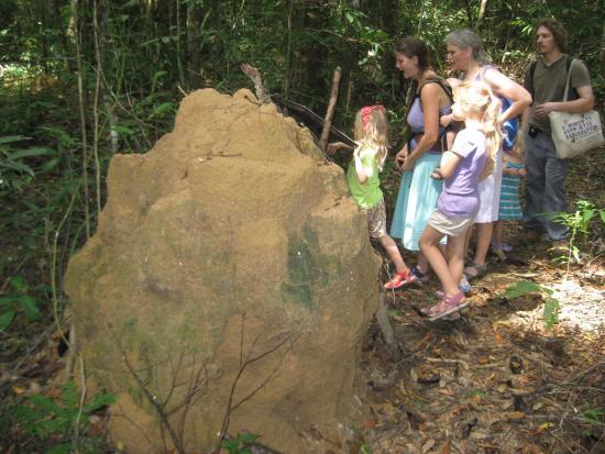 Khao Phra Thaeo National Park: Giant Termite Mound