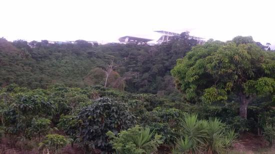 Parque Nacional Braulio Carrillo: Bosque siempre verde