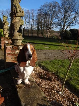 The Dales Country House Hotel : They spoil him rotten!