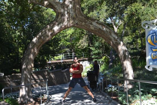 Posing under circus tree picture of gilroy gardens for Gilroy garden trees