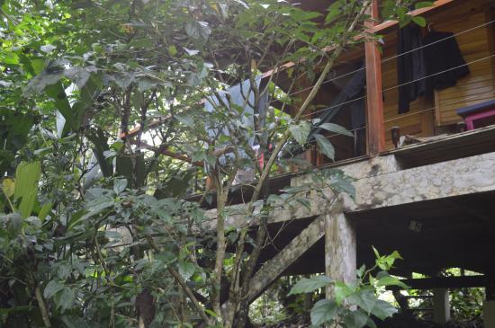 El Tucan Jungle Lodge: Vista desde el exterior de la cabaña
