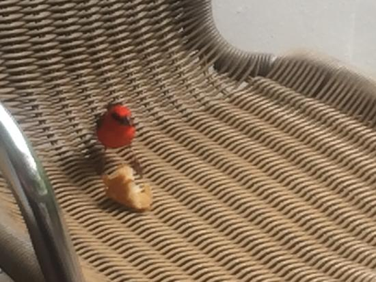 Pingo Studios : Birds