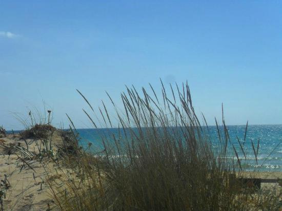 Pescoluse, Italien: I meravigliosi gigli del Salento che crescono selvaggi in prossimità della spiaggia..