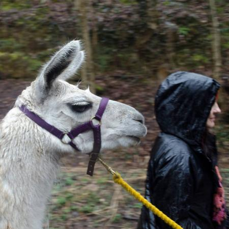 Llama Adventures