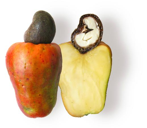 cashew fruit with cashew nut on top  picture of fruit brazil, rio, Beautiful flower