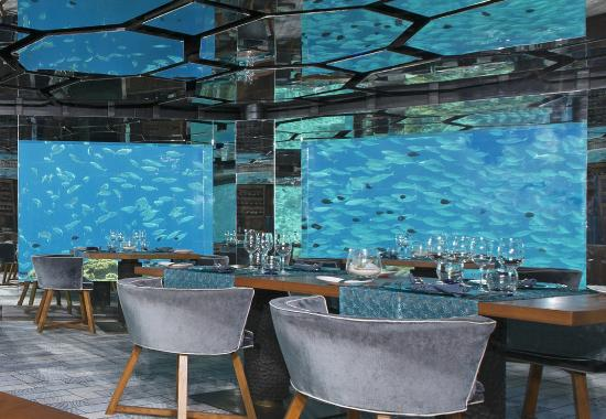 sea underwater restaurant the natural theatre of the indian ocean before your eyes - Underwater World Restaurant
