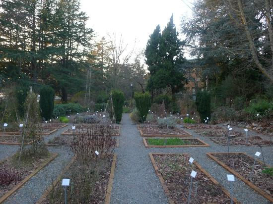 University of Washington Medicinal Herb Garden