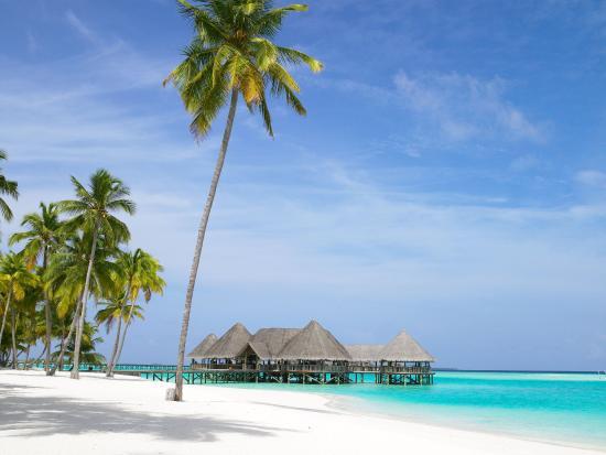 Gili Lankanfushi Maldives: Bar