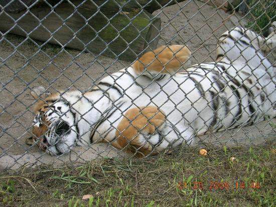 Resultado de imagem para zoologico curitiba
