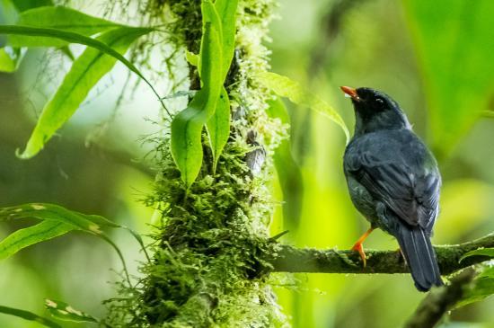Mayol Lodge: nature
