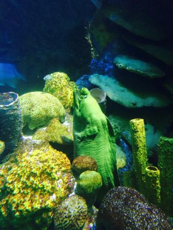 Tidal Pool Picture Of New England Aquarium Boston