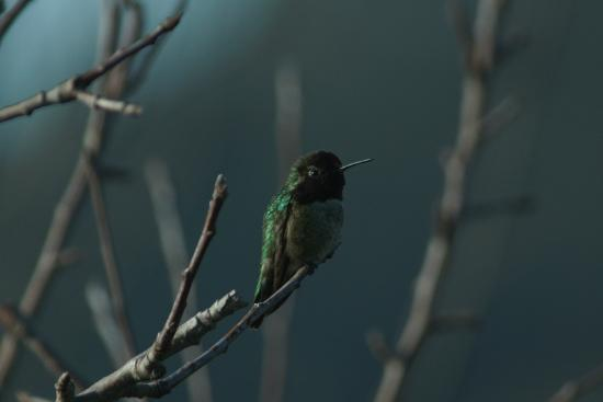 AppleGarden Cottage : Hummingbird at the cottage