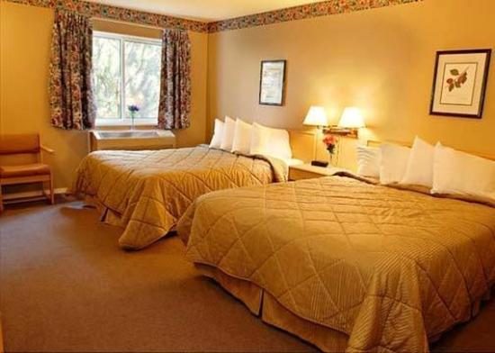 Super 8 West Kelowna BC: Guest Room