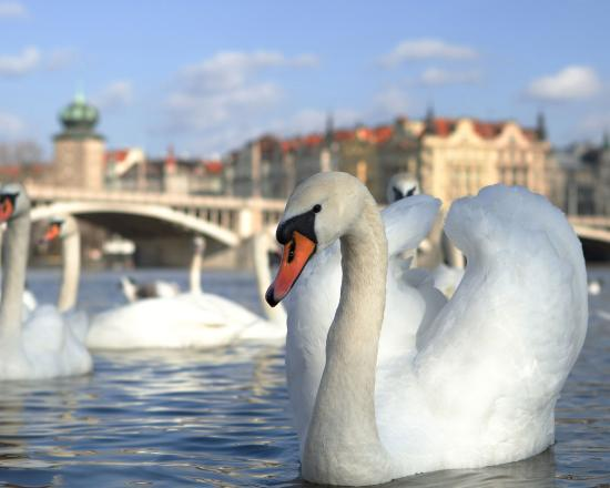 Best Western Amedia Praha: Local Attractions