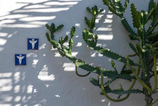 El Angel Azul Hacienda: Garden