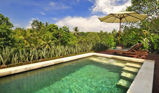 Villa Semana: Pool