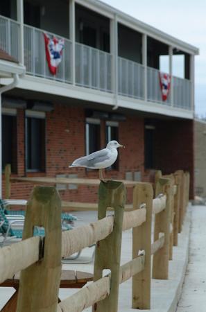 Pilgrim Sands on Long Beach: Seagull