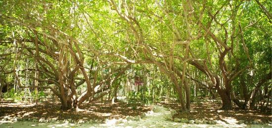 The Moorings Village: Resort View