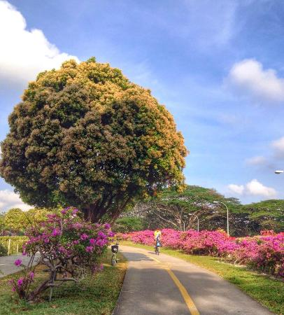 Beautiful blooming flowers in East Coast Park