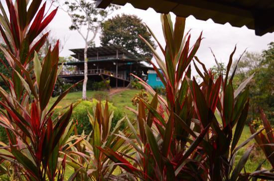 Drake Bay, كوستاريكا: Vista desde habitacion